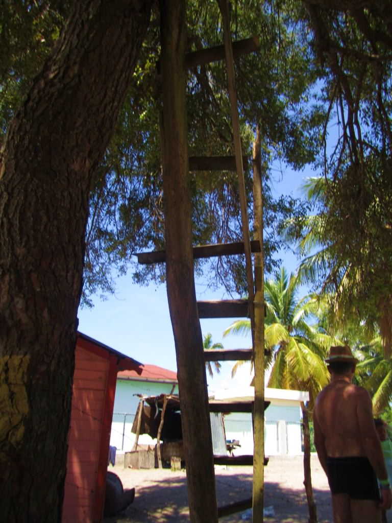 """Cell phone tree"" Mano Juan, Isla Saona"