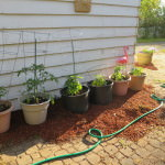 Vegetable gardening for busy people who don't know what they're doing