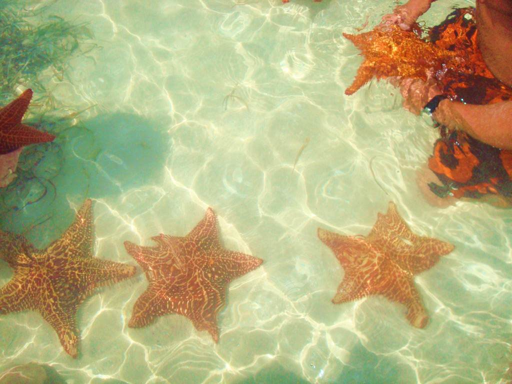 Red sea stars, Piscina Natural, Dominican Republic