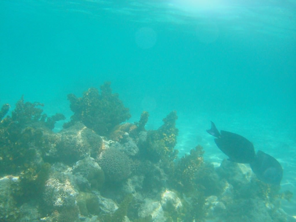 Snorkeling Isla Saona, Dominican Republic