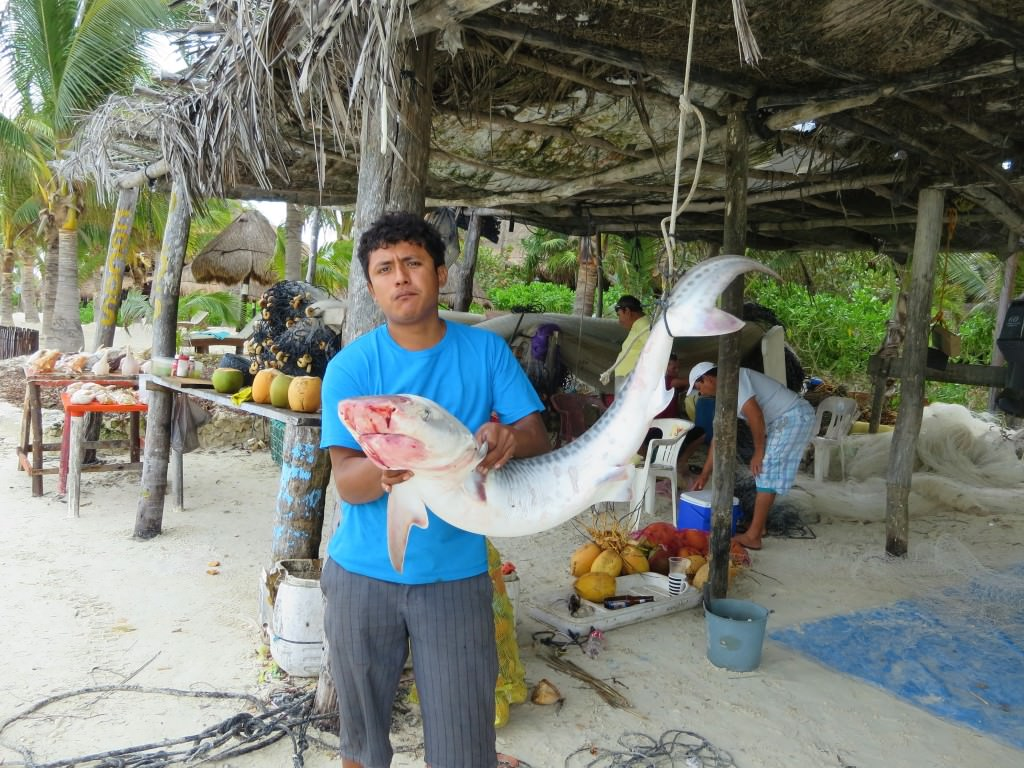 Fisherman with a tiger shark, Isla Holbox