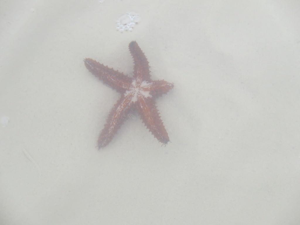 punta mosquito isla holbox mexico