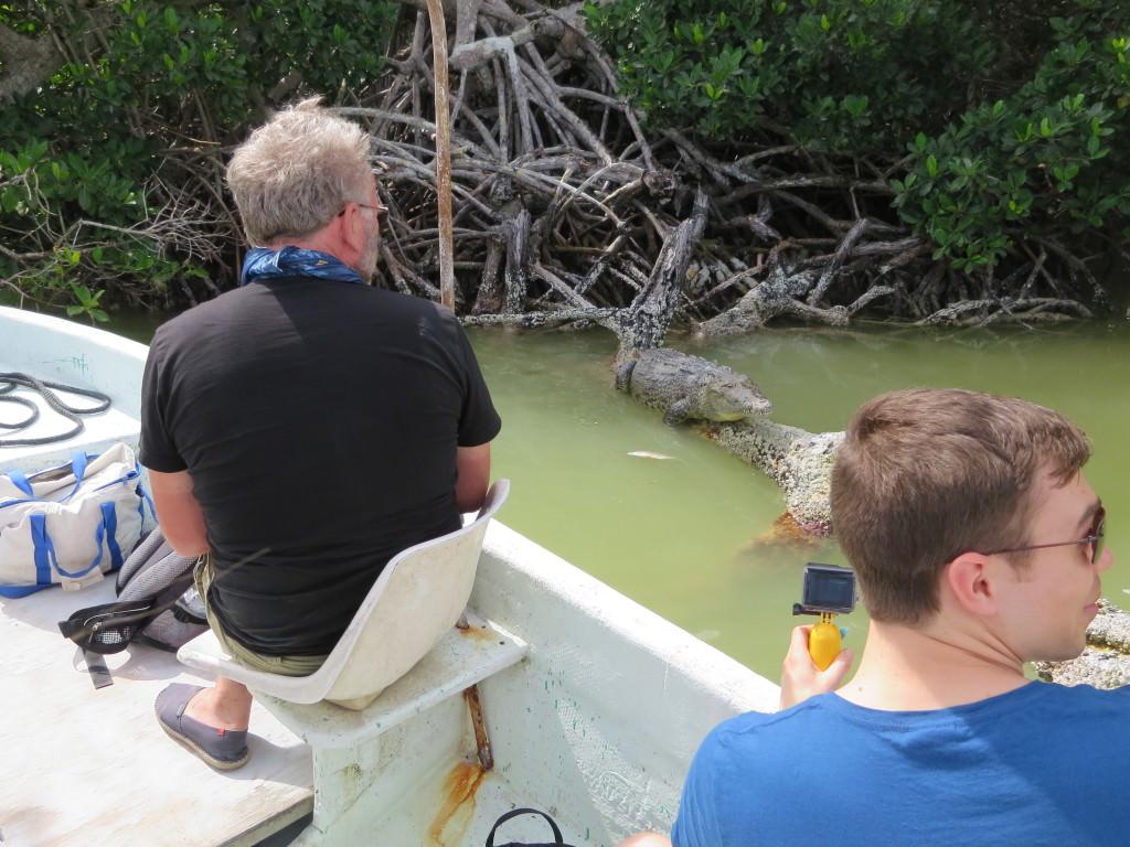 Crocodile at Rio Lagartos