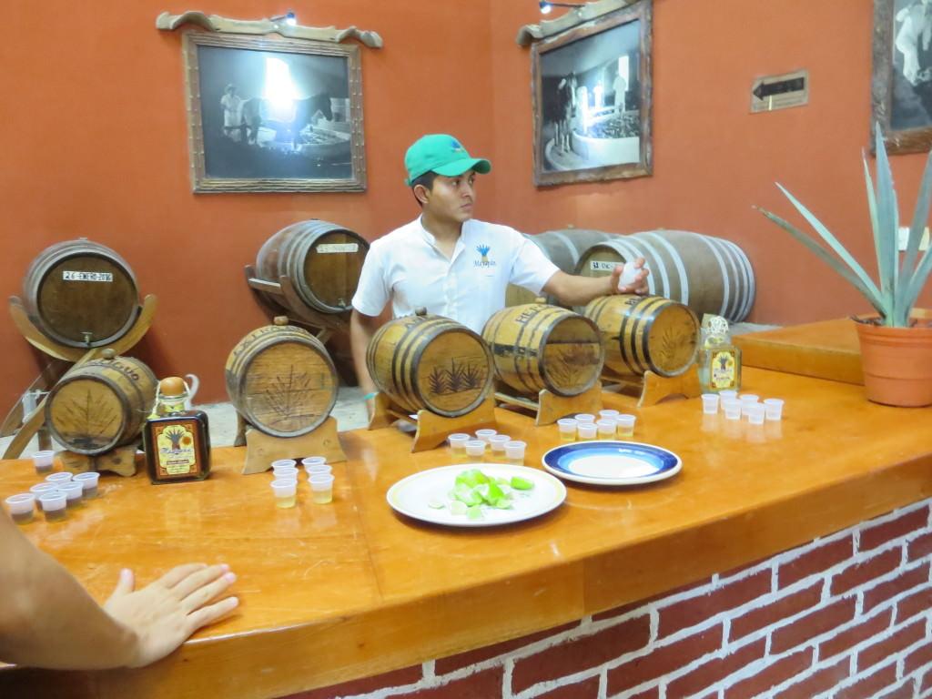 Destileria Mayapan tequila distillery, Valladolid