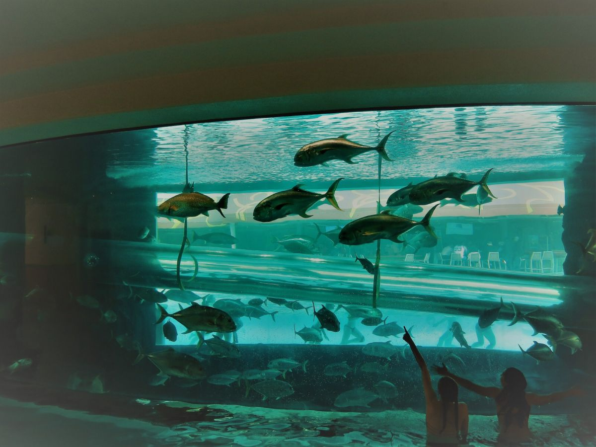 Shark tank without sharks at The Golden Nugget, downtown Las Vegas