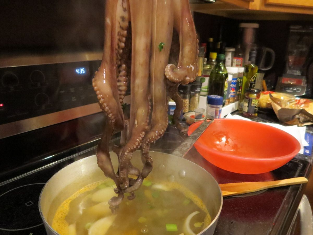 "Cooking octopus: ""shocking the octopus"""
