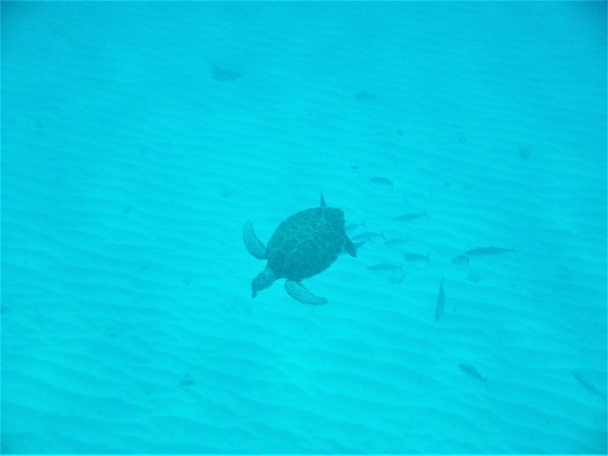 Snorkeling in Carlisle Bay, Barbados