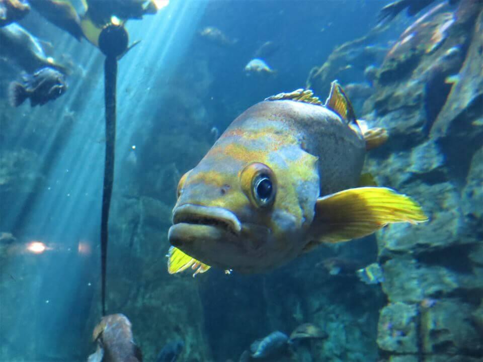 Oregon Coast Aquarium, Newport