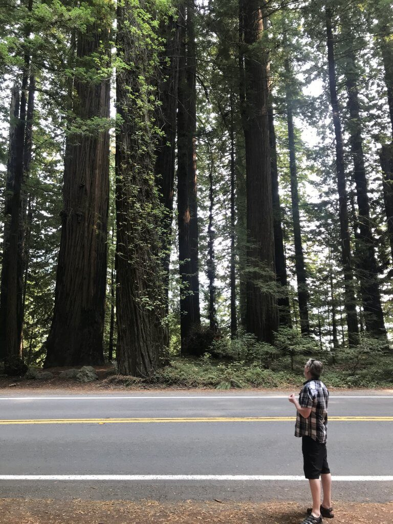Avenue of the Giants, Redwood Forest CA