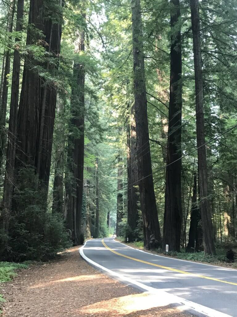 Avenue of the Giants, Redwood Forest California